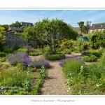 Le pommier centenaire au centre du jardin - L'Herbarium est un jardin perché sur les remparts de la cité médiévale, au coeur de Saint-Valery. C'était autrefois le jardin des religieuses et il a conservé un pommier et des groseillers centenaires. Le jardin, constitué de trois terrasses, a été restauré en 1995 par une association de bénévoles qui continue de l'entretenir et de l'ouvrir au public. Saison : été - Lieu : Saint-Valery-sur-Somme, Baie de Somme, Somme, Picardie, France