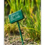 Les plantes sont regroupées par famille de façon très pédagogique - L'Herbarium est un jardin perché sur les remparts de la cité médiévale, au coeur de Saint-Valery. C'était autrefois le jardin des religieuses et il a conservé un pommier et des groseillers centenaires. Le jardin, constitué de trois terrasses, a été restauré en 1995 par une association de bénévoles qui continue de l'entretenir et de l'ouvrir au public. Saison : été - Lieu : Saint-Valery-sur-Somme, Baie de Somme, Somme, Picardie, France