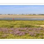 Le Cap Hornu et les lilas de mer