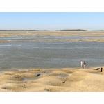 Les phoques sur les bancs de sable au Hourdel
