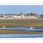 France, Somme (80), Baie de Somme, Le Hourdel, //