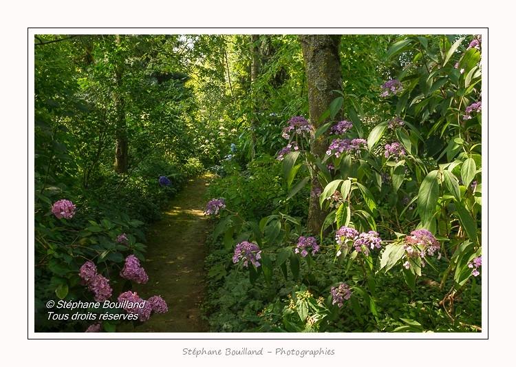 Les_jardins_des_lianes_0042-border