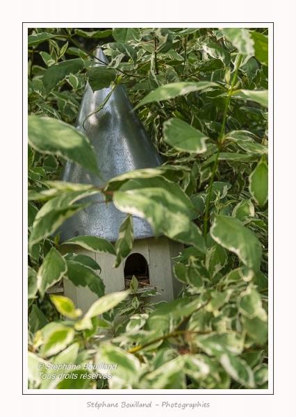 Les_jardins_des_lianes_0081-border