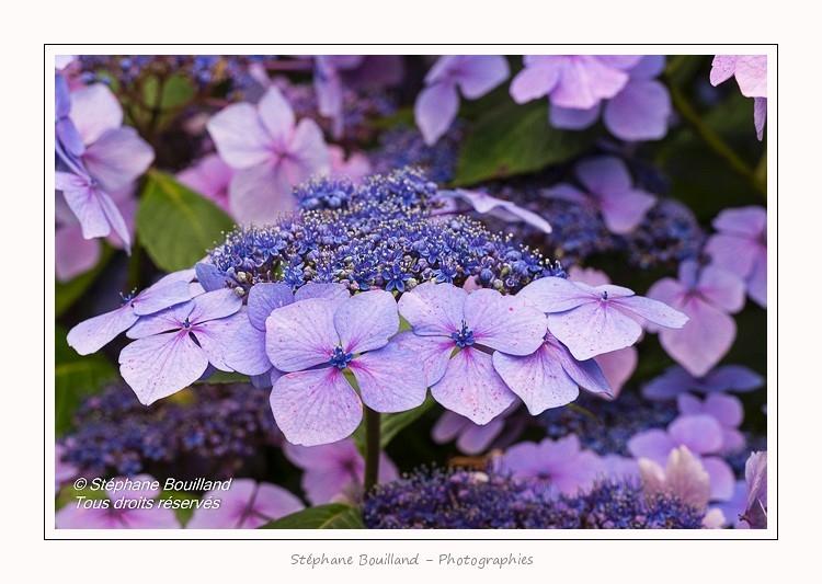 Les_jardins_des_lianes_0149-border