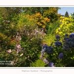 Les_jardins_des_lianes_0006-border