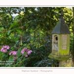 Les_jardins_des_lianes_0012-border