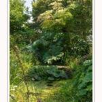 Les_jardins_des_lianes_0024-border