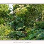 Les_jardins_des_lianes_0025-border