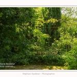 Les_jardins_des_lianes_0043-border