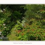 Les_jardins_des_lianes_0056-border