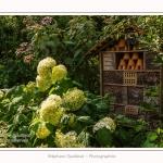 Les_jardins_des_lianes_0079-border