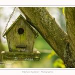 Les_jardins_des_lianes_0123-border