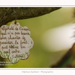 Les_jardins_des_lianes_0133-border