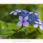 Les_jardins_des_lianes_0135-border