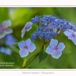 Les_jardins_des_lianes_0139-border