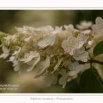 Les_jardins_des_lianes_0142-border