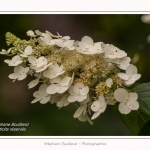 Les_jardins_des_lianes_0143-border