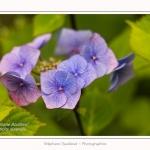 Les_jardins_des_lianes_0145-border