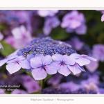 Les_jardins_des_lianes_0147-border