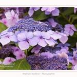 Les_jardins_des_lianes_0148-border