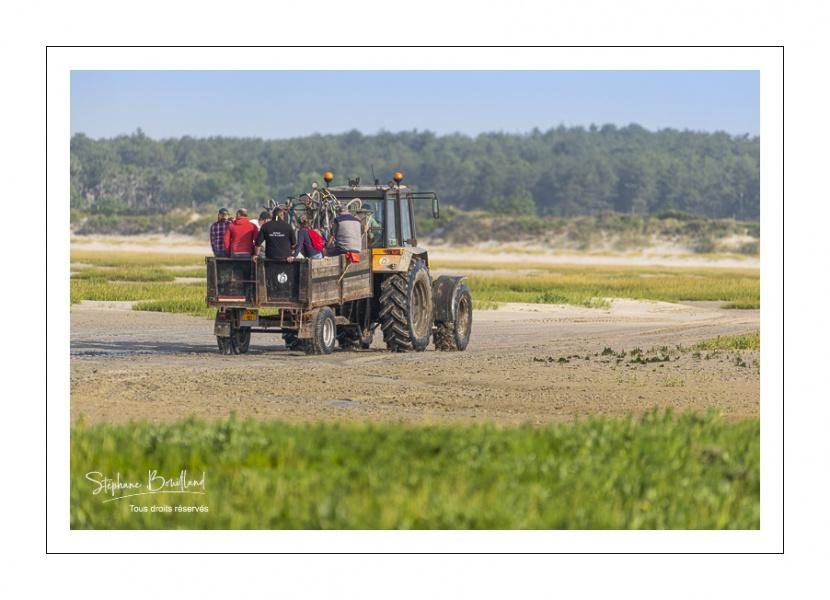 Ramassage de coques par les mytiliculteurs dans la réserve naturelle