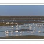 Les oiseaux dans la baie de Somme à marée basse