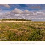 Saison : été - Lieu : Plages de la Maye, Réserve naturelle, Le Crotoy, Baie de Somme, Somme, Hauts-de-France, France.