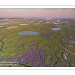 Survol du fond de la Baie de Somme. Les tâches violettes sont des lilas de mer.