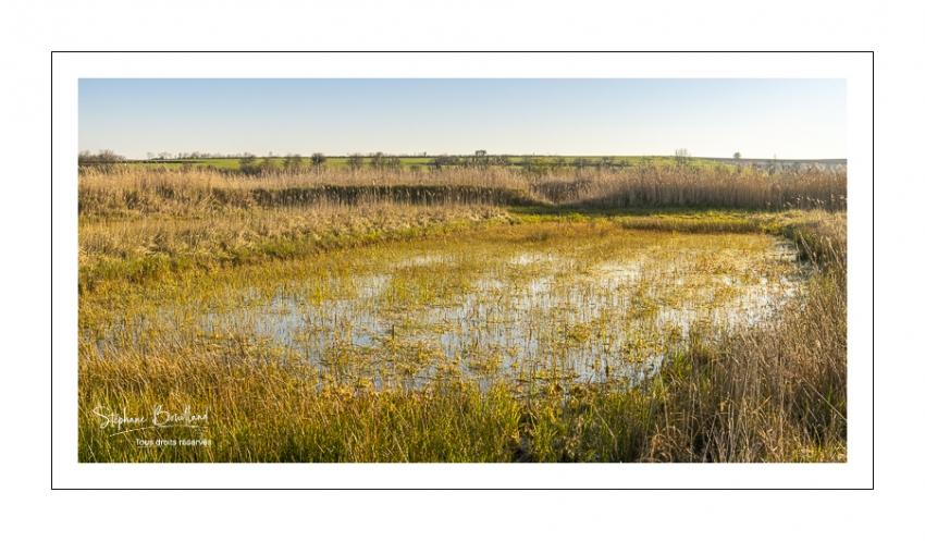 Mares et étangs dans les renclôtures