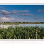 Paysage_Marais_Le_Crotoy_15_05_2016_001-border
