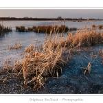Février 2012 : vague de froid intense sur la France. Toute la Baie de Somme est gelée. Saison : Hiver, Lieu : Le Crotoy, Baie de Somme, Somme, Picardie,France, Côte Picarde