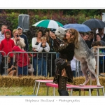 http://www.aitawak.fr/index.php - aitawak@orange.fr  - Foire de la Saint-Louis et fête médiévale à Crécy en Ponthieu - Saison : été - Lieu : Crécy-en-Ponthieu, Somme, Picardie, France.