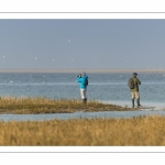 Promeneurs venant observer les oiseaux en baie de Somme dans la réserve naturelle à marée haute