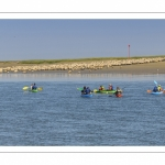 Kayak et moutons d'estran en baie de Somme