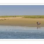 Promeneurs et moutons d'estran