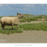 Moutons_21_08_2015_011-border