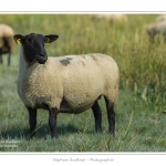 Moutons_21_08_2015_029-border
