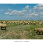 Moutons_21_08_2015_032-border