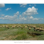Moutons_21_08_2015_033-border