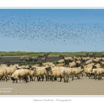Moutons_21_08_2015_042-border