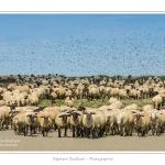 Moutons_21_08_2015_043-border