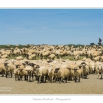 Moutons_21_08_2015_045-border