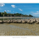 Moutons_21_08_2015_063-border