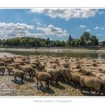 Moutons_21_08_2015_066-border