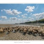 Moutons_21_08_2015_072-border