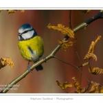 Saison : hiver - Lieu : Marcheville, Somme, Picardie, France.