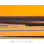 Limicoles (bécasseaux, courlis, gravelots, huitriers...) en baie de Somme au crépuscule à marée basse. Saison : Hiver - Lieu : Baie de Somme,Plages de la Maye, Le Crotoy, Somme, Picardie, France