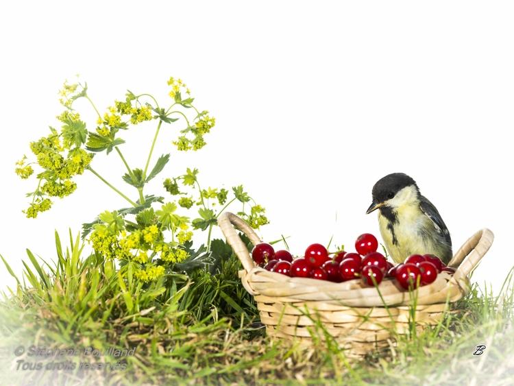 Nouvelle s rie dans mon jardin d 39 oiseaux photos de la for Camping jardin de mon pere la baie