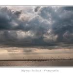 La pointe du Hourdel sous un ciel d'orage avec une colonie de mouettes - Au loin le blockhaus du Hourdel, en bout de la digue de galets. Saison : Printemps - Lieu : Le Hourdel, Baie de Somme, Somme, Picardie, France