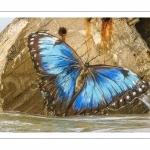 Papillon peint sur le blockhauss du hourdel